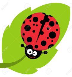 leaf bug clipart  [ 1252 x 1300 Pixel ]