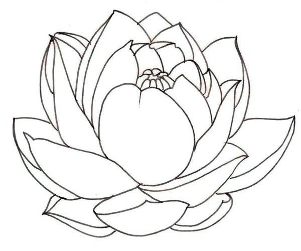 lotus flower clipart black white 20 free Cliparts