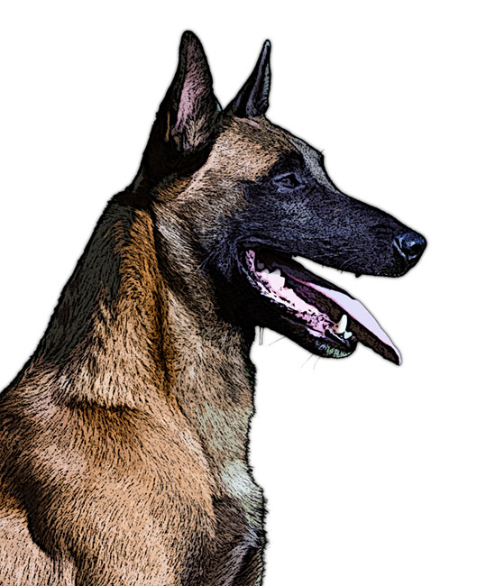 Malinois Clipart Clipground