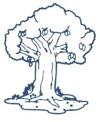 mango tree clipart mangga trees clip cliparts library clipground