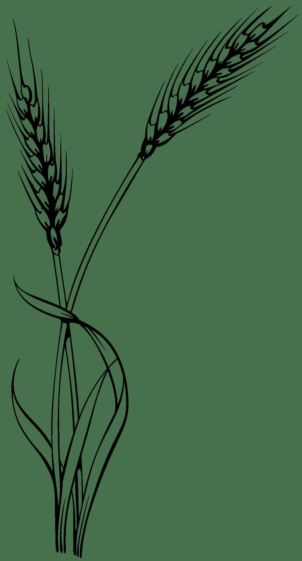 Millet Clipart