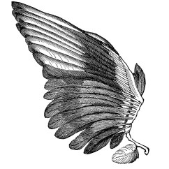 Clipping Duck Wings Diagram 2004 Wrx Ecu Wiring Clipart Bird Clipground