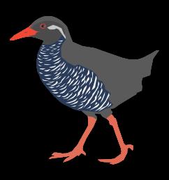 big image png rail bird clipart [ 2400 x 2400 Pixel ]