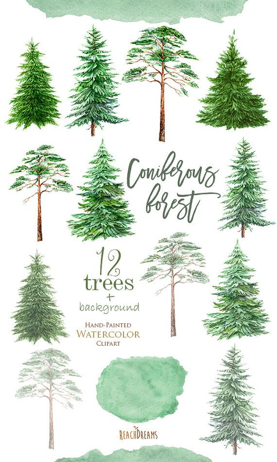 Southern Yellow Pine Clipart Clipground