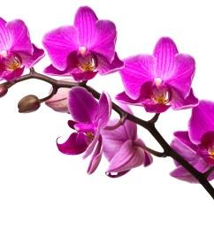 95 purple flowers clipart no background lavender flower  [ 3888 x 2592 Pixel ]