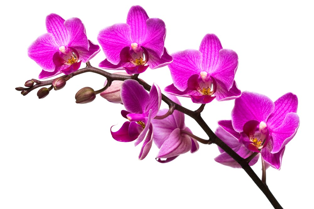 medium resolution of 95 purple flowers clipart no background lavender flower