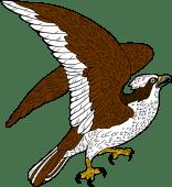 Osprey clipart Clipground
