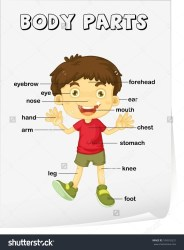 body parts worksheet vocabulary diagram clipart face vector cartoon poster illustration blank kid mouth cliparts royalty showing clipground learn graphics
