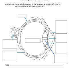 Canine Eye Diagram 2003 Chevy Tahoe Radio Wiring Parts Of The Eyes Clipart Clipground