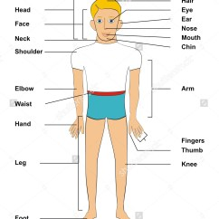 Internal Brain Diagram Kenwood Kdc 108 Wiring Parts Of The Human Body Clipart - Clipground