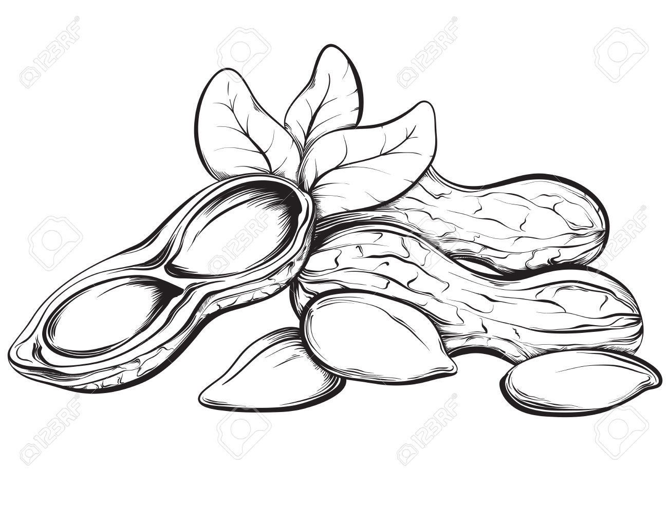 Peanut Outline Clipart Black And White 20 Free Cliparts
