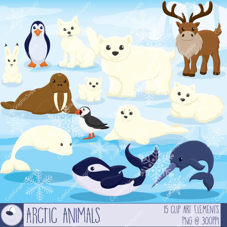 Cute Cartoon Seal Wallpaper Polar Animals Clipart Clipground