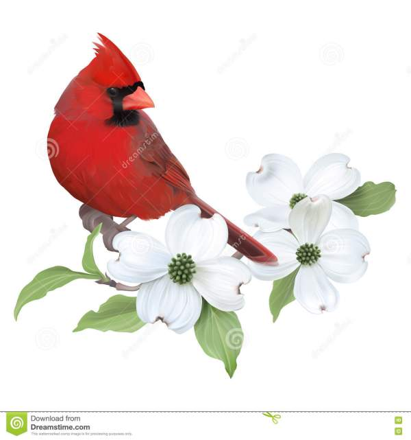 red dogwood clipart - clipground