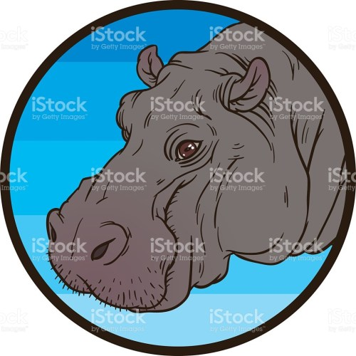 small resolution of hippopotamus amphibius or river horse stock vector art 479057736