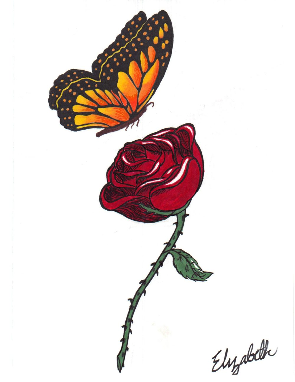 medium resolution of 18 butterfly drawings art ideas