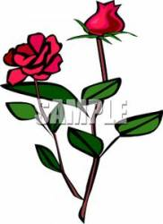 rose clipart plant roses clip long stemmed clipground couple royalty