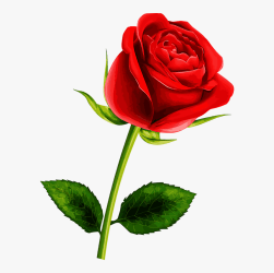 roses flowers clipart vermelha rosa clipground single dougie kenneth douglas