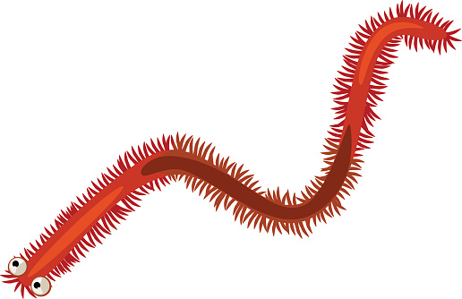 sand worm clipart - clipground