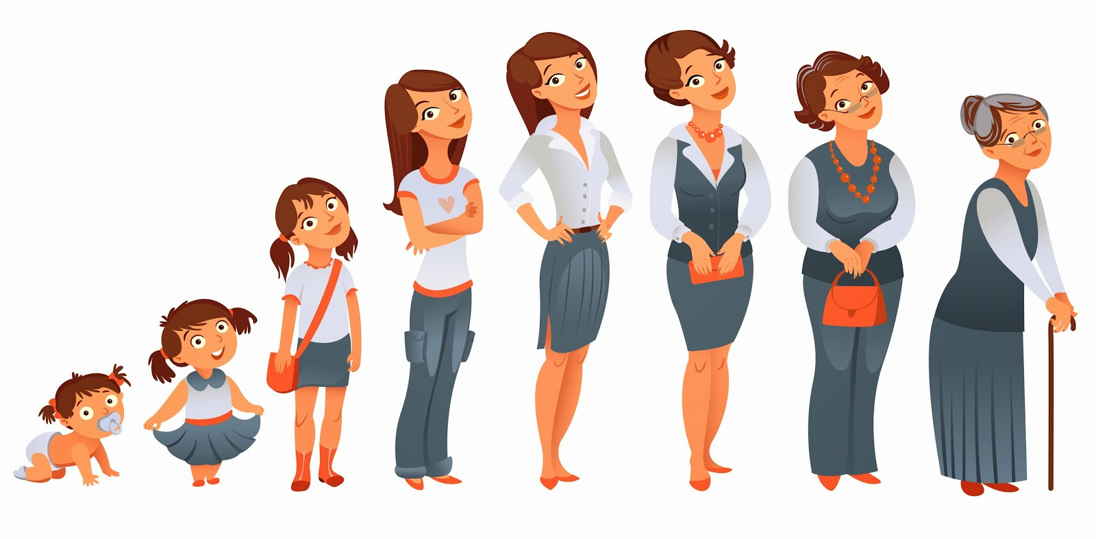 Stages Of Development Clipart