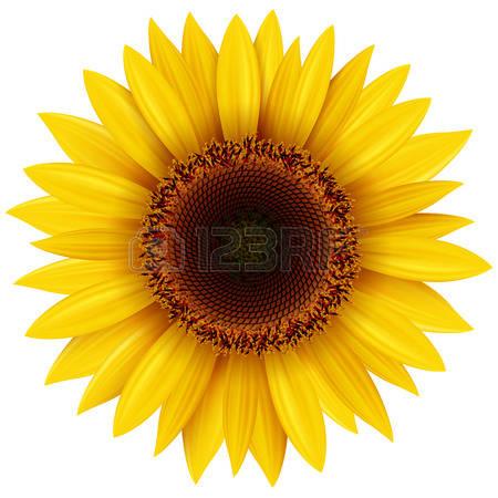 sun flower clipart - clipground