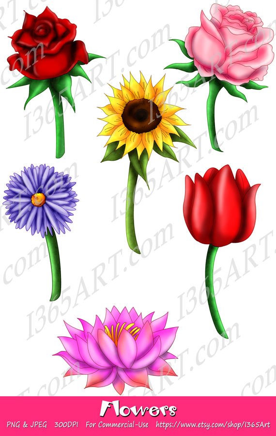 sunflower red clipart 20 free cliparts