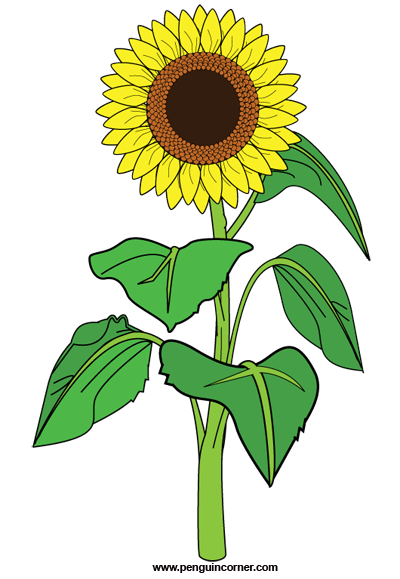 plant sunflower clipart - clipground