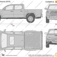 Shark Skeleton Diagram 99 Toyota Camry Wiring Tacoma Clipart - Clipground