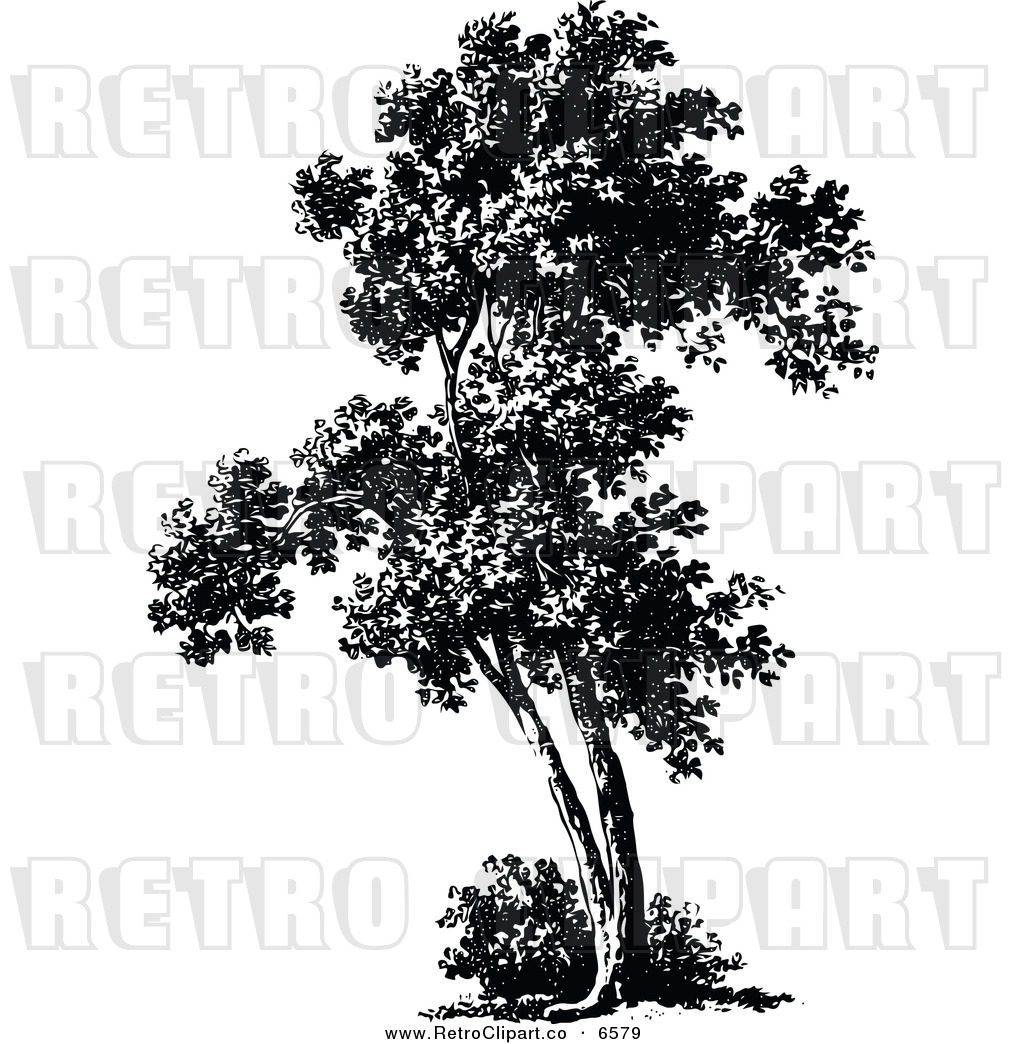 Tall Trees Cypress Clipart
