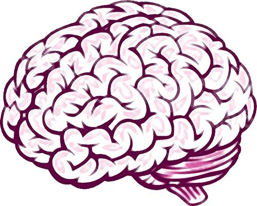 small resolution of brain
