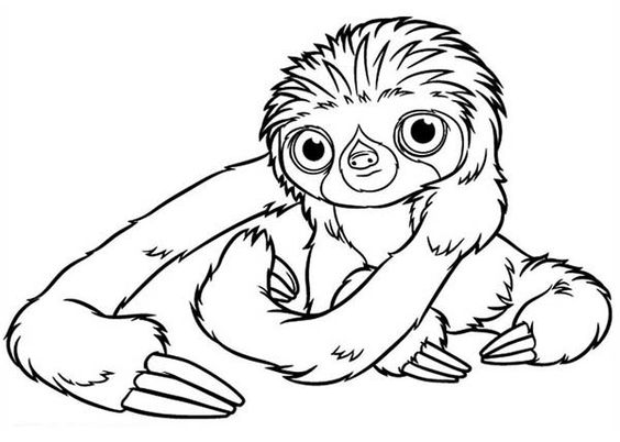 three toed sloth clipart  clipground