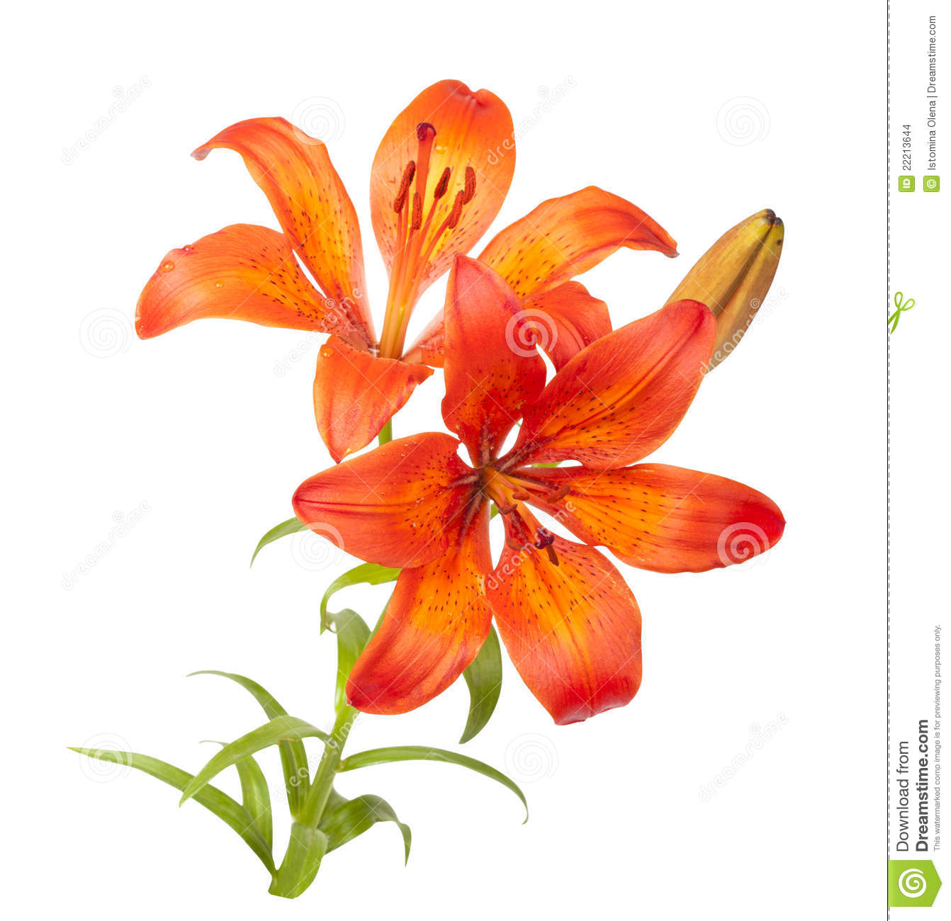 Vector Wallpaper Fall Colors Tiger Lilies Clipart 20 Free Cliparts Download Images On