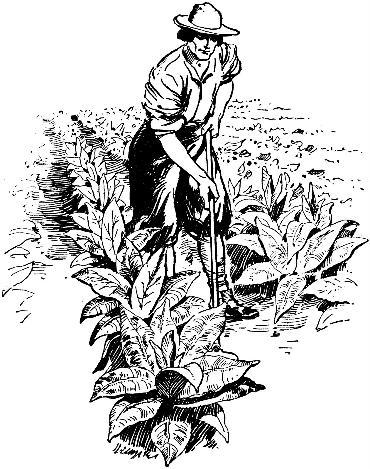Tobacco Farm Clipart
