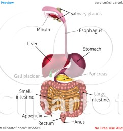 clipart of a 3d labeled diagram of the human digestive system  [ 1080 x 1024 Pixel ]