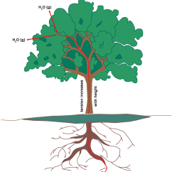 Plant Diagram Clip Art Rb25det S13 Wiring Transpiration Clipart - Clipground