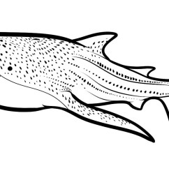 whale shark clipart black and white [ 1557 x 798 Pixel ]