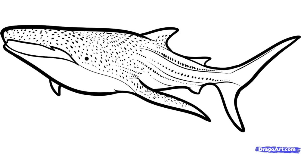 medium resolution of whale shark clipart black and white