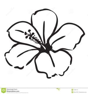 hibiscus clipart flower drawings flowers clip draw clipground 1000