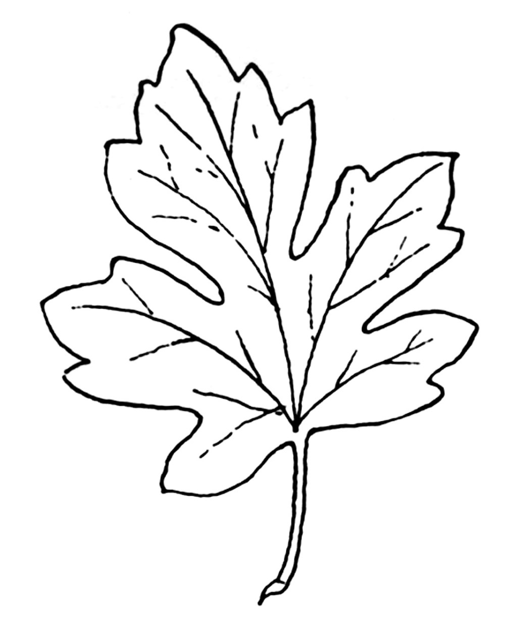 medium resolution of black and white leaf clipart