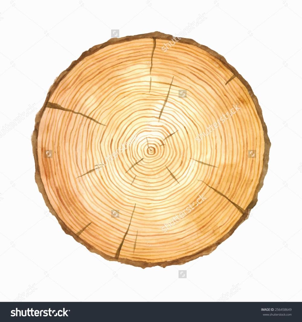 medium resolution of tree rings watercolour illustration vector hand stock vector