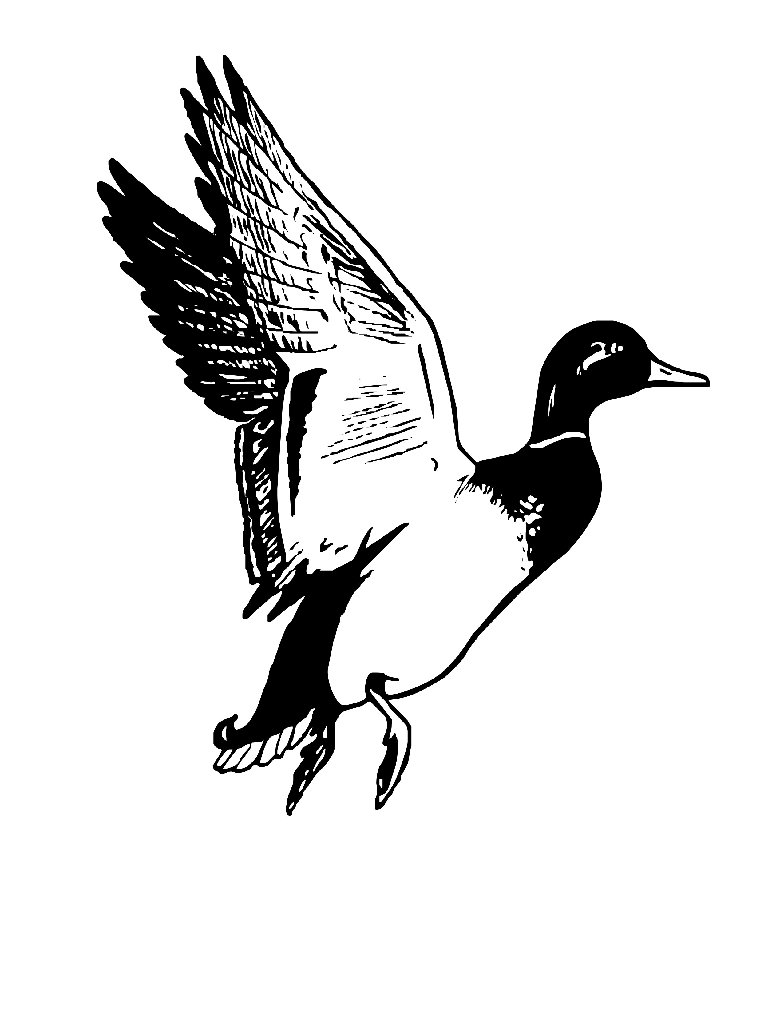 Waterfowl Clipart