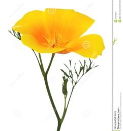california poppy clipart 1937574  [ 1066 x 1300 Pixel ]