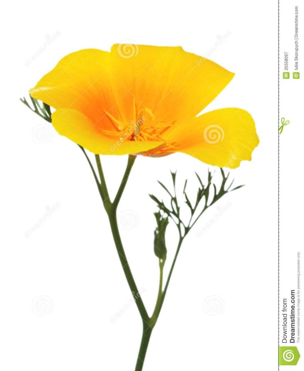 medium resolution of california poppy clipart 1937574