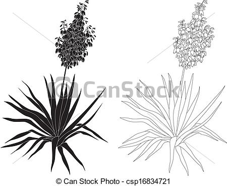 Yucca Clipart Clipground