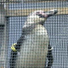 最近の動物園の脱出事情が色々な意味でアグレッシブ