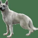 dogs-hewie