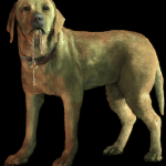 dogs-ruleofrose