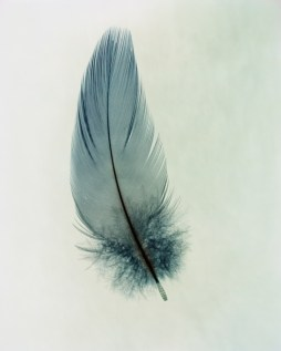 feather3
