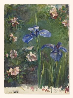 Wild Rose and Iris