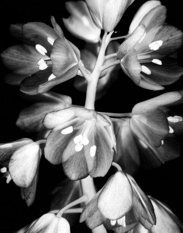 Flower_01_1999