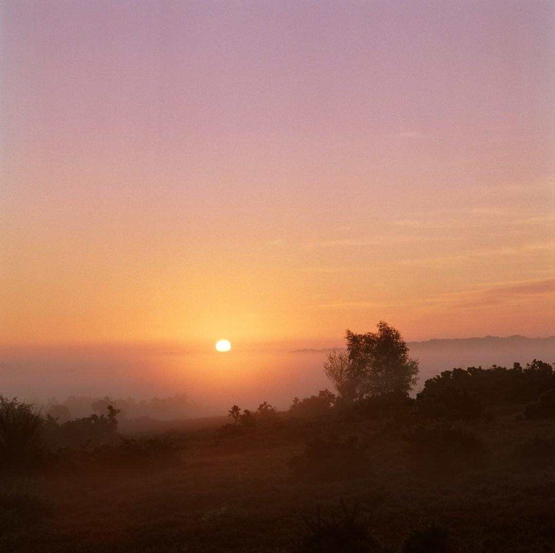 Sunrise-New-Forest.10.CPRE.Arrowsmith.jpg